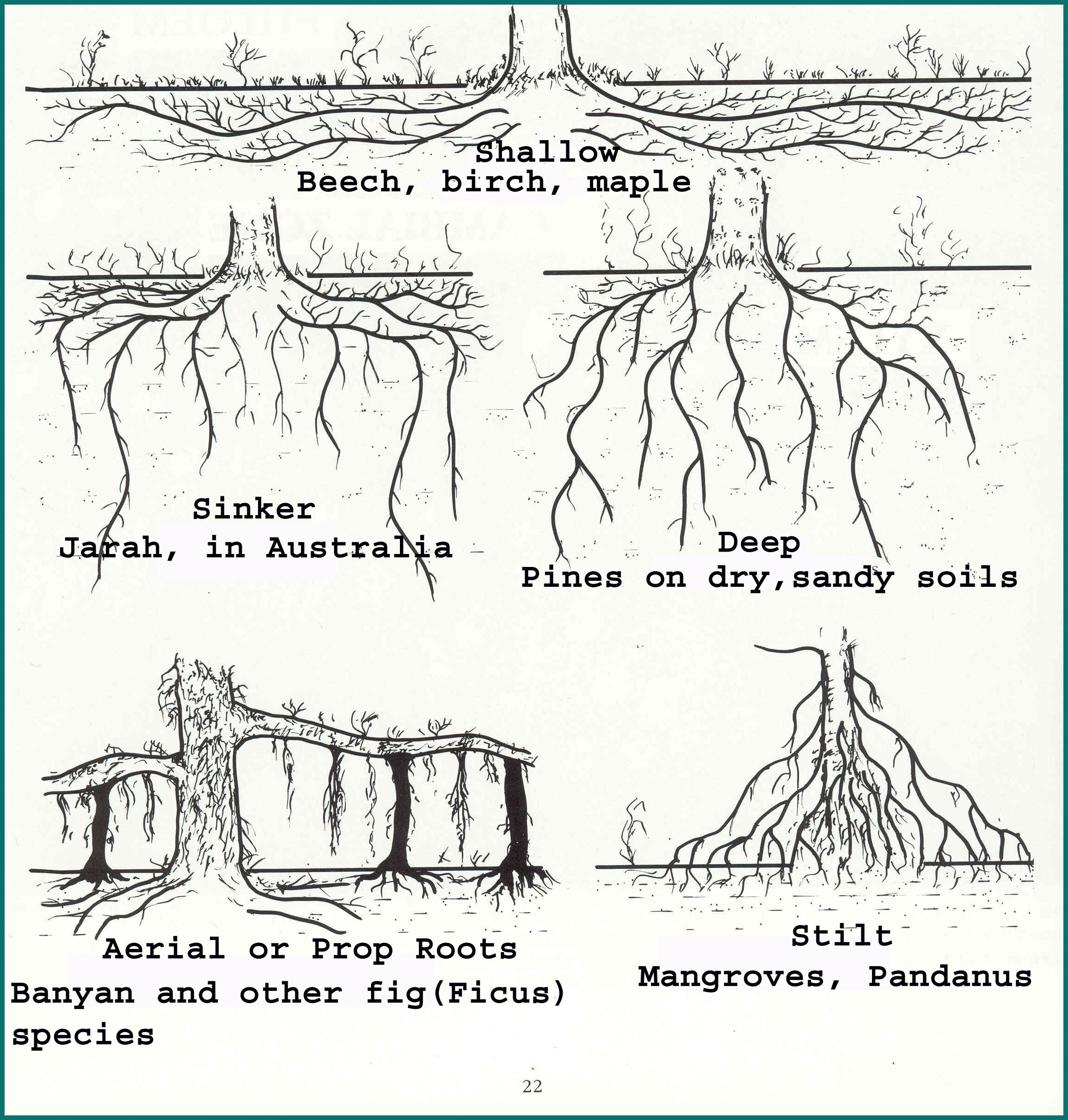 New page 1 for Different parts of soil